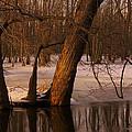 Trees At Collins Creek by Jim Vance