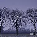 Trees At Night by Mats Silvan