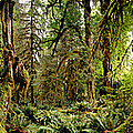 Trees At Olympic National Forest by Panoramic Images