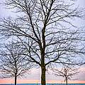 Trees At The Boardwalk In Toronto by Elena Elisseeva