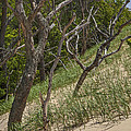 Trees At The Edge Of A Dune At Silver Lake by Randall Nyhof