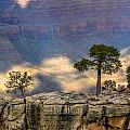 Trees At The Grand Canyon by Pamela Schreckengost