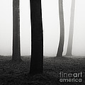 Trees Dancing In The Fog by Matteo Colombo