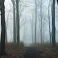 Trees During Autumn In Forest, Dupage by Panoramic Images