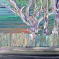 Trees by Fabrizio Cassetta