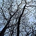 Trees From Below by Mechala Matthews
