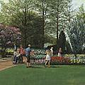 St. Louis Botanical Garden Trees by Don  Langeneckert