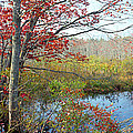 Trees In A Forest, Damariscotta by Panoramic Images