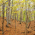 Trees In A Forest, Stephen A. Forbes by Panoramic Images