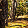 Trees In A Park by James Adams