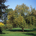 Trees In Autumn by Anthony Cooper/science Photo Library