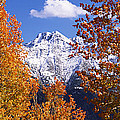 Trees In Autumn, Colorado, Usa by Panoramic Images