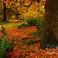 Trees In Autumn Woodland by Martyn Arnold