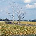 Trees In Field by Linda Kerkau