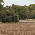 Trees In Field by Pete Jackson