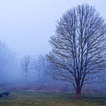 Trees In Fog #2 by Sharon M Connolly