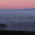 Trees In Fog At Sunrise by Robert Woodward