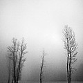 Trees In Mist by Davorin Mance