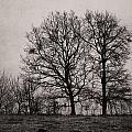 Trees In November by Cristina-Velina Ion