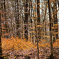 Trees In The Forest In March With Orange Leaves by Matthias Hauser
