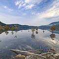 Trees In The Lake by Debra and Dave Vanderlaan