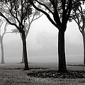 Trees In The Midst No. 06 by Pictorial Decor