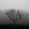 Trees In The Midst No. 08 by Pictorial Decor