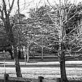 Trees In The Park by Mechala Matthews