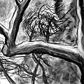 Trees In The Wind by Jason Gluskin