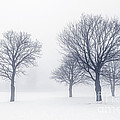 Trees in winter fog by Elena Elisseeva