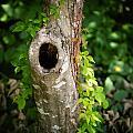 Tree's Mandala by Christy Cox