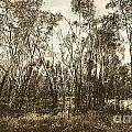Trees Of Ashburn by Jorgo Photography - Wall Art Gallery