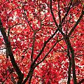Trees Of Autumn by Wendy Le Ber
