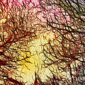 Trees Of The Four Seasons by Kaye Menner