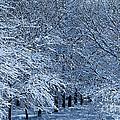 Trees Of Winter by Elizabeth Winter
