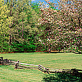 Trees On A Field, Davidson River by Panoramic Images