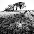 Trees On A Hill by John Farnan