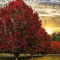 Trees On Fire by Debra and Dave Vanderlaan