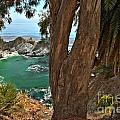 Trees Over Mcway Falls by Adam Jewell