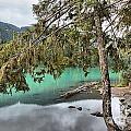 Trees Overhanging Cheakamus Lake by Adam Jewell