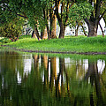 Trees Reflection On The Lake by Heiko Koehrer-Wagner