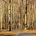 Trees Shadows by Tammy Schneider