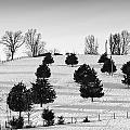 Trees by Sheri Bartoszek