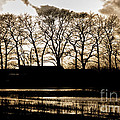 Trees Silhouettes by Mike Santis