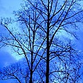 Trees So Tall In Winter by Maria Urso