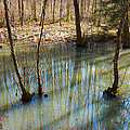 Trees Standing In The Water by Matthias Hauser