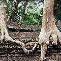 Trees United by Artur Bogacki