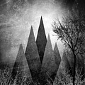 Trees V I I I by PIA Schneider