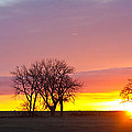 Trees Watching The Sunrise Panorama View by James BO Insogna