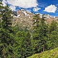 Trentino - Pejo Valley On Summer by Antonio Scarpi